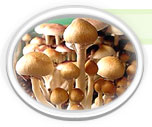 Click here for more information on Treasure Coast Spores